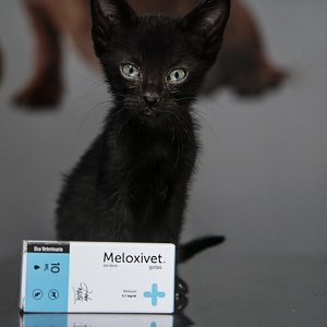 Meloxicam in cats